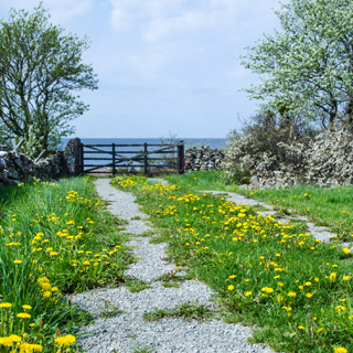 What scent does a dandelion road and the sea have?
