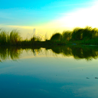 Close your eyes and smell a pond at sundown